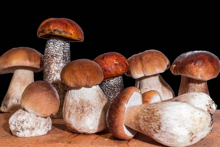 seven mushrooms boletus and two red-capped scaber stalk stand on a wooden board on a black background Stock Photo