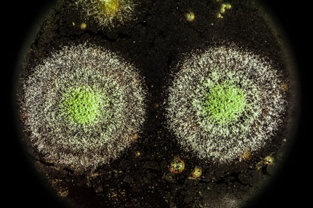 view of the microscope development of green mold on organic basis, macro abstract background