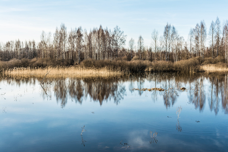 high water, rivers and forests without leaves in the early spring, a clear sunny day 스톡 콘텐츠