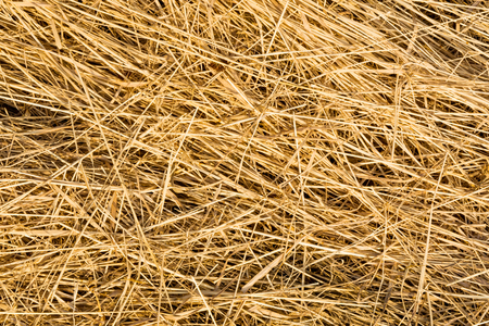 hay texture, chaotically arranged dry stems of plants, close-up abstract background