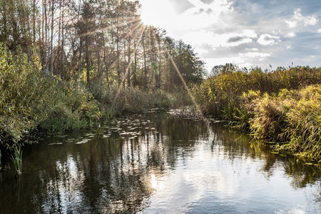 forest river with banks overgrown with trees and reeds, autumn evening with the setting sun, wild nature background Фото со стока