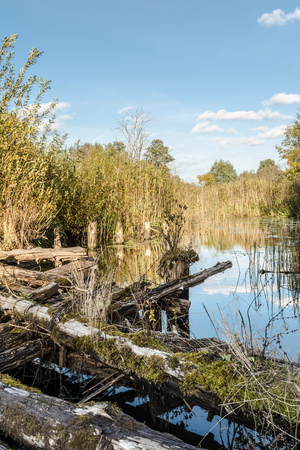 the river is overgrown with vegetation, ancient destroyed bridge of logs, autumn landscape with a marshy pond and the shifting light of the setting sun, wild nature background