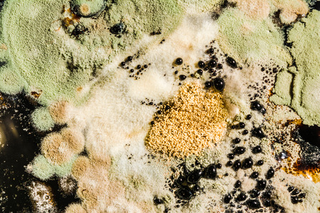 formation of green mold in the Petri dish, abstract microbiological texture on a black base