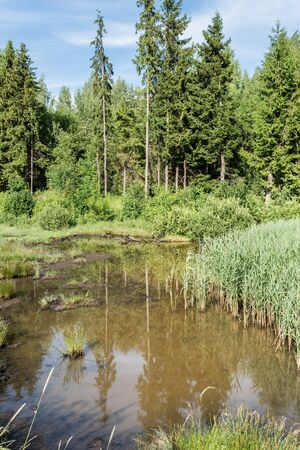 Summer landscape with swamp lake and forest. Nature with forest river and swamp. Country wetland landscape. Swamp water forest trees landscape. Marshland swamp water trees