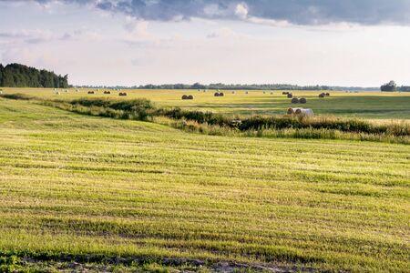 Pacas redondas llenan un campo de trigo en el norte de las Grandes Llanuras mientras persiste el último calor relativo del otoño. Paisaje de verano por la noche con campos amarillos y cielo azul