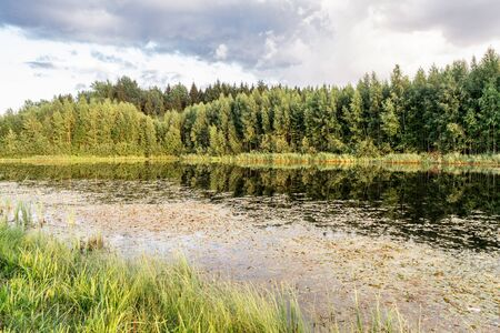 Forest lake in the summer evening, forest landscape background