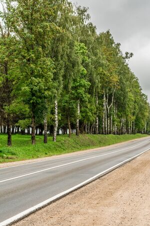the asphalt road with a sandy roadside, green area with often planted trees, landscape overcast autumn day Stockfoto