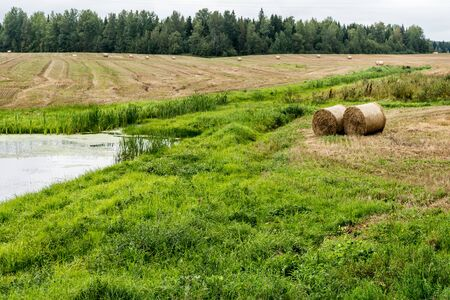 agricultural field after harvesting with round bales of straw, landscape with a small pond on a cloudy autumn day Stok Fotoğraf