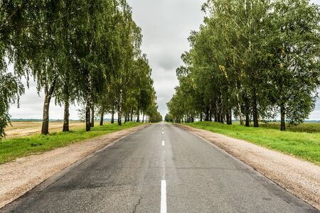 the asphalt road with a sandy roadside, green area with often planted trees, landscape overcast autumn day Stock fotó