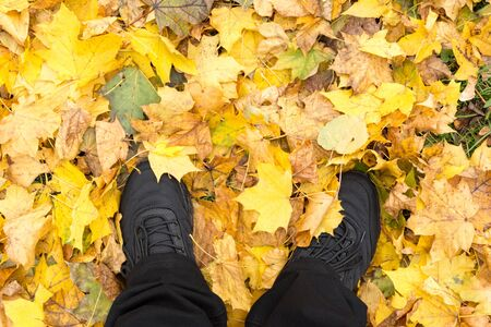 Yellow and orange autumn leaves background. legs in black sneakers and jeans on the background of fallen leaves. Space for text. 写真素材