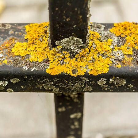 yellow mold or moss on a black metal structure, metal damage, abstract background, selective focus