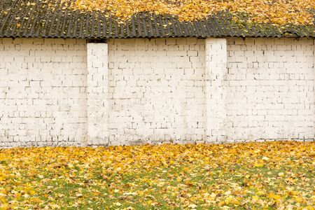 Outside wall of the white brick shed. On the roof of slate are yellow leaves. The ground is covered with fallen dry orange foliage. Abstract background for an inscription based on an old building