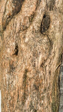 lilac tree bark texture, close-up nature abstract background