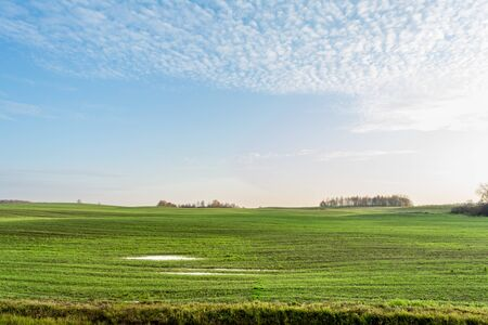 Green field and blue sky with white cloud, clear autumn evening, nature landscape background