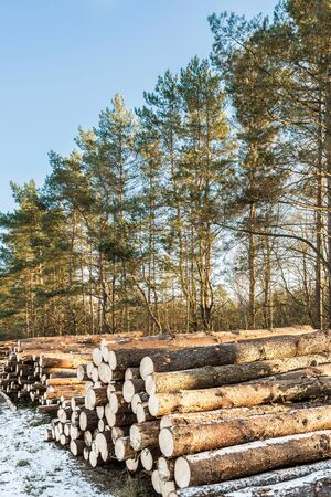 Natural Wooden Logs Of Felling In Winter Forest. Logging Of Environment For Lumber Industry. Winter nature landscape