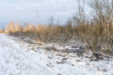 Snow covered marshland. Remains of pure white snow on the river flood near Bush and trees in early spring. Nature landscape background 写真素材