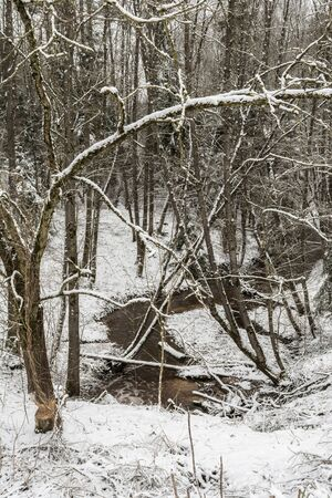 Tree branches in the snow in the forest against the background of a stream, winter landscape background