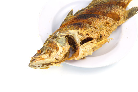 nilotica: fried nile tilapia fish on white plate