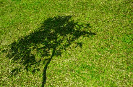 árbol genealógico: Sombra del árbol en corto la hierba verde en la primavera Foto de archivo