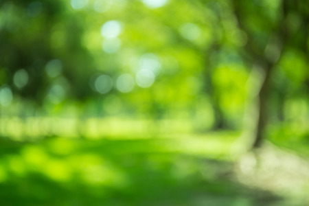 Blurred forest background, natural bokeh 写真素材
