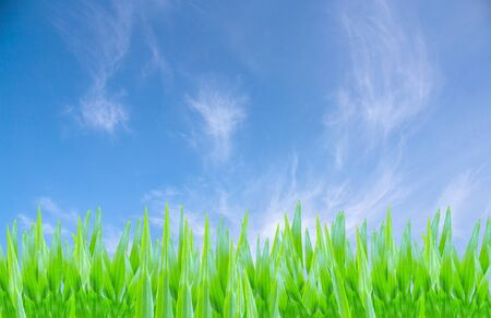 background  grass: Nature background, grass and sky Stock Photo
