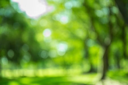 Wazig bos achtergrond, natuurlijke bokeh Stockfoto