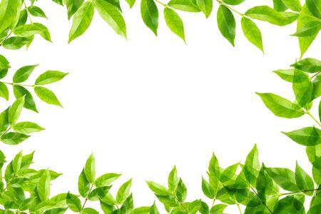 leaves frame: hojas marco verde sobre fondo blanco Foto de archivo