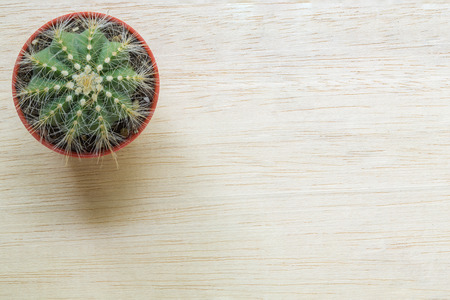 mexico cactus: Top view of a Cactus on the wood