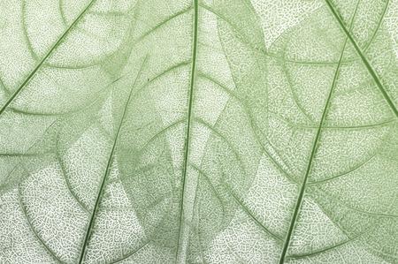leave, leaf design abstract background Banque d'images