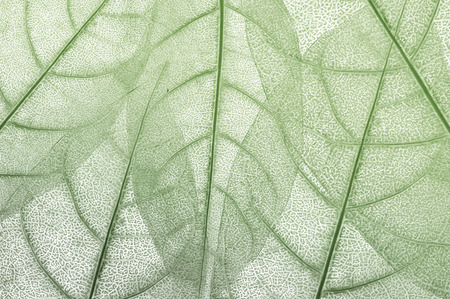 nature pattern: leave, leaf design abstract background Stock Photo