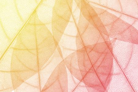 macro verlof, blad ontwerp abstracte achtergrond Stockfoto