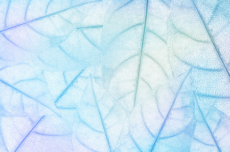 on leave: leave, leaf design abstract background Stock Photo
