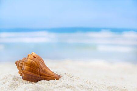 shells on tropical beach