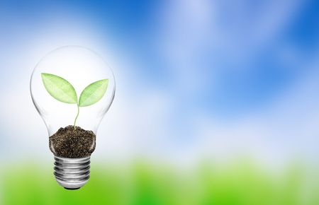 growing inside: Light bulb with plant growing inside on nature background. Concept of  conserve environment