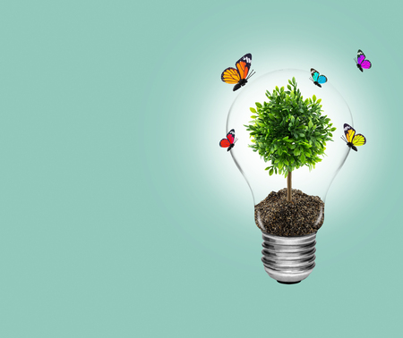 bulb fields: light bulb with energy and fresh green tree inside with butterfly on nature background, concept environment with light bulb tree inside