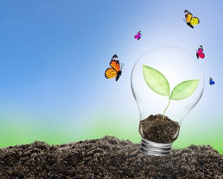 Light bulb with plant growing inside on soil and butterfly. Concept of conserve environment