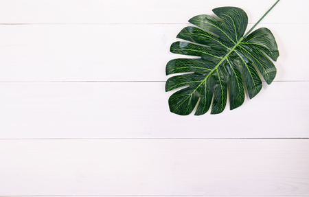 Leaf plant on texture wooden table white background, leaves fresh spring on wood desk with copy space, top view. Stock Photo