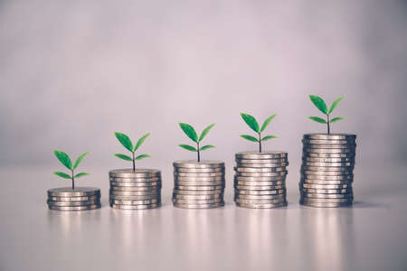 Coin stack with increase growth and leaf, finance and saving with tree, investment for profit and success, planning with financial, growing economy and fund, stock and income, business concept.