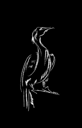 This image shows the different types of birds isolated on a black background photo