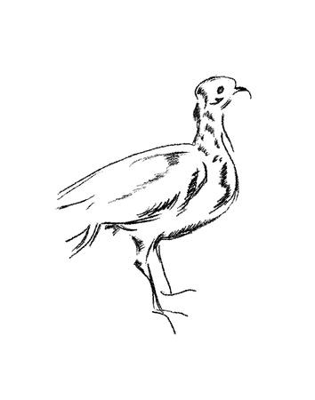 Cette image montre les diff�rents types d'oiseaux isol� sur un fond blanc Banque d'images - 9733215