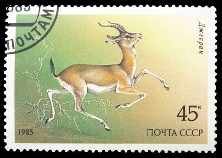 USSR - CIRCA 1985: A Stamp printed in USSR shows image of a Goitered Gazelle , series , circa 1985 photo