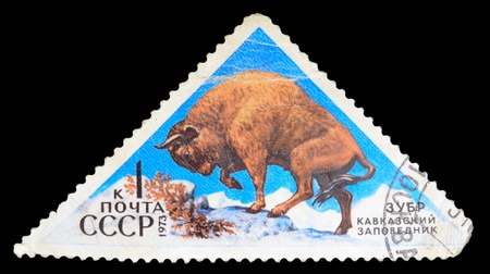 USSR - CIRCA 1973: A stamp printed in USSR shows a bison, circa 1973