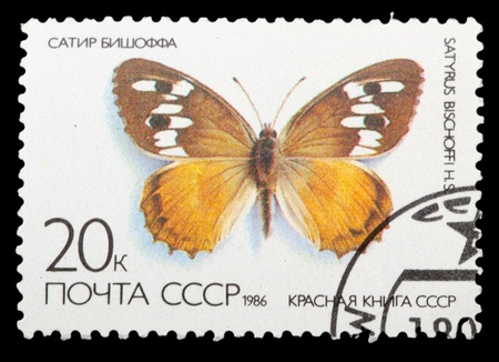 USSR - CIRCA 1986: A Stamp printed in USSR shows image of a Satyrus bischoffi butterfly, series  Red Book USSR, circa 1986 photo