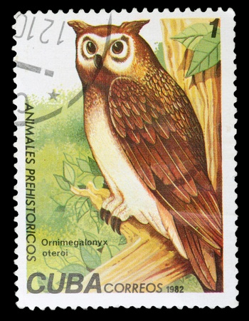 CUBA - CIRCA 1982: A Stamp printed in CUBA shows image of a ornimegalonyx oteroi, from the series, circa 1982 photo