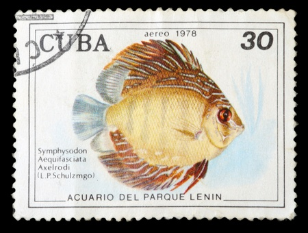 aquarian: CUBA - CIRCA 1978: A stamp printed by Cuba shows the Symphysodon Aequifasciata Axelrodi fish, stamp is from the series, circa 1978.