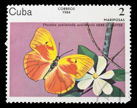 CUBA - CIRCA 1984: A stamp printed in Cuba shows Butterfly, circa 1984 Stock Photo - 11796189