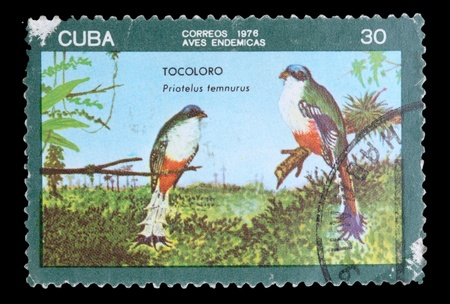 stamp collecting: CUBA - CIRCA 1976: A postage stamp printed in the Cuba shows image the life of birds, the bird TOCOLORO Priatelus temnurus, circa 1976