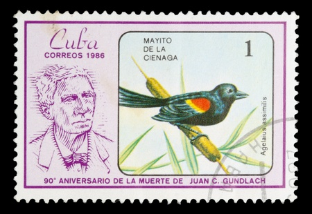 CUBA - CIRCA 1986: A Stamp shows image of a Warbler with the designation Agelaius . Note - Juan Gundlach (1810-1896), ornithologist., circa 1986 photo