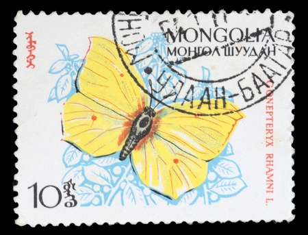 MONGOLIA - CIRCA 1970: A stamp printed in Mongolia shows butterfly Gonepteryx rhamni, circa 1970 Stock Photo - 11799055
