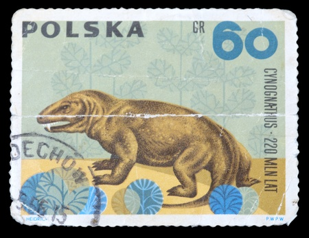 POLAND - CIRCA 1966: A stamp printed in Poland shows animal with the inscription Cynognathus 220 million years, series , circa 1966 photo